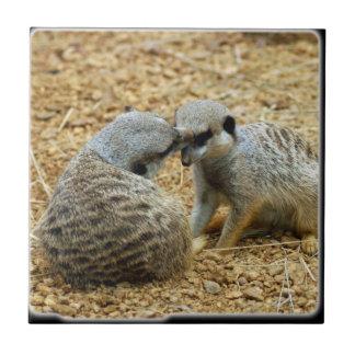 meerkat3_10x10 tiles