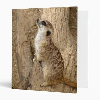 meerkat 0115