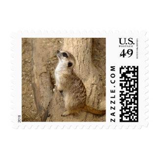 meerkat 0115 stamp