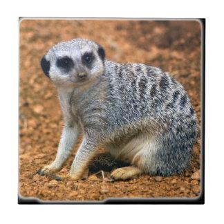 meerkat_10x10 tiles