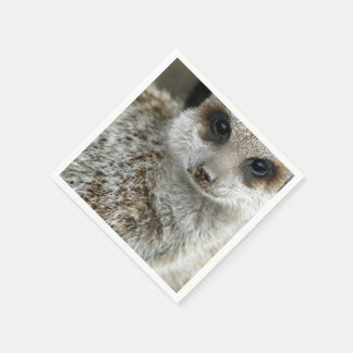 meerkat-16.jpg paper napkin