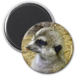 Meerkat 2 Inch Round Magnet