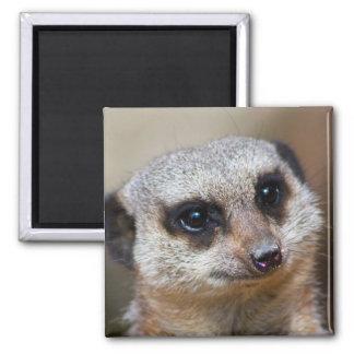 Meerkat 2 Inch Square Magnet
