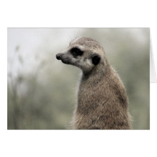 Meerkat (4703) - Blank Inside Card