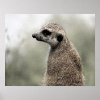 Meerkat (4703) - Poster