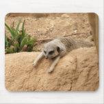 Meerkat a caliente alfombrilla de ratones