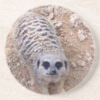 Meerkat against clay looking up photograph drink coaster