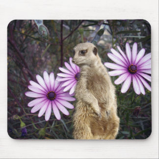 Meerkat_And_Daisies,_ Mouse Pad