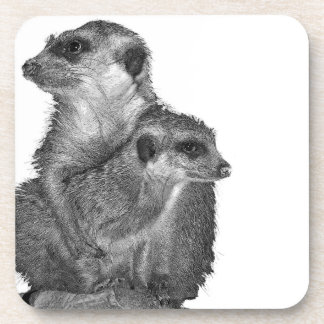 Meerkat and Pup, B & W, White Back Coaster