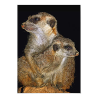Meerkat and Pup in Oil (2) 5x7 Paper Invitation Card
