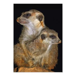 Meerkat and Pup in Oil (2) Card