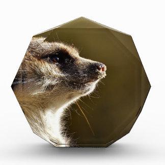 Meerkat Animal Nature Zoo Tiergarten Small Fur Award