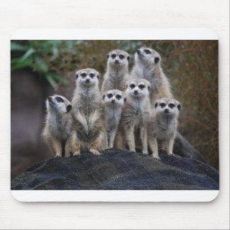 Meerkat Animal Safari Africa Cute Suricate Mouse Pad