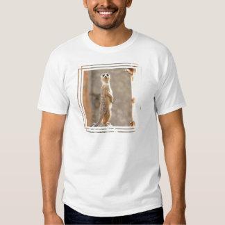 Meerkat at Attention Men's T-Shirt