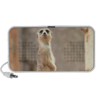 Meerkat at Attention Portable Speakers