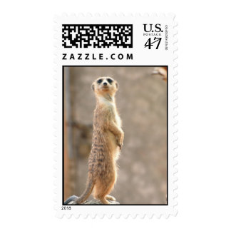 Meerkat at Attention Postage Stamp