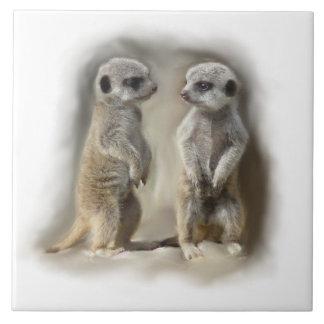 meerkat babies tile