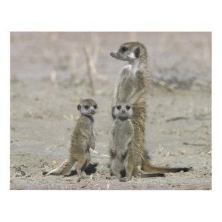 Meerkat Baby Sitter And Pups ( Suricata Suricata ) Panel Wall Art