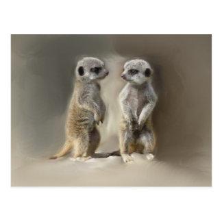 Meerkat baby twins postcard