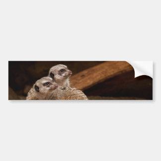 Meerkat Background Bumper Sticker