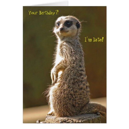 Meerkat Belated Birthday Card