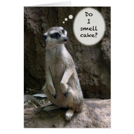 Meerkat Birthday card