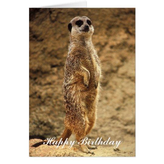Meerkat Birthday Card Zazzle