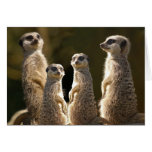 Meerkat Birthday greeting card