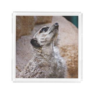 Meerkat - buscar la inspiración bandeja cuadrada