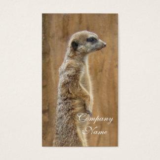 Meerkat business cards