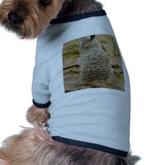 Meerkat Camiseta Con Mangas Para Perro