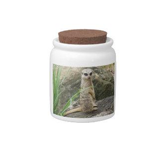 Meerkat Candy Jar
