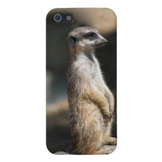 Meerkat Case For iPhone 5