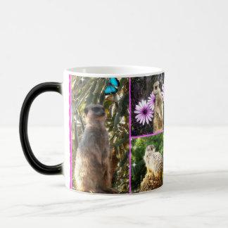 Meerkat_Collage,_Magic_Morph_Coffee_Mug Magic Mug