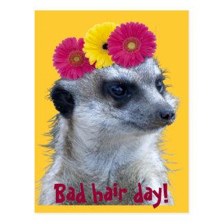 Meerkat con 3 margaritas brillantes del gerber postal