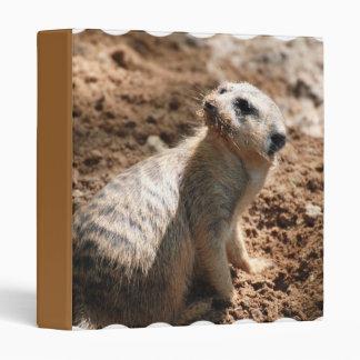Meerkat con la carpeta sucia de la cara
