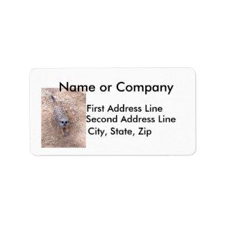 Meerkat contra la arcilla que mira para arriba la  etiquetas de dirección