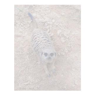 Meerkat contra la arcilla que mira para arriba la  membrete