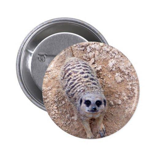 Meerkat contra la arcilla que mira para arriba la  pins