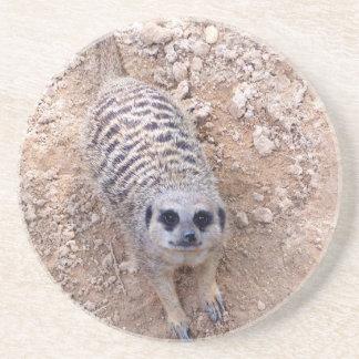 Meerkat contra la arcilla que mira para arriba la  posavasos cerveza
