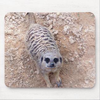 Meerkat contra la arcilla que mira para arriba la  alfombrilla de raton