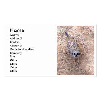 Meerkat contra la arcilla que mira para arriba la tarjetas de visita