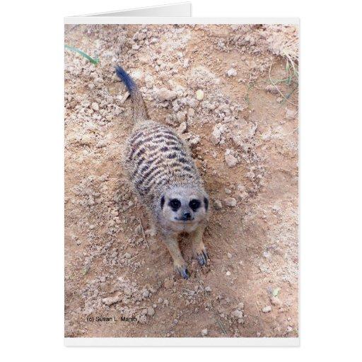 Meerkat contra la arcilla que mira para arriba la tarjeta pequeña