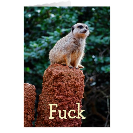 Meerkat - cumpleaños tardío felicitacion