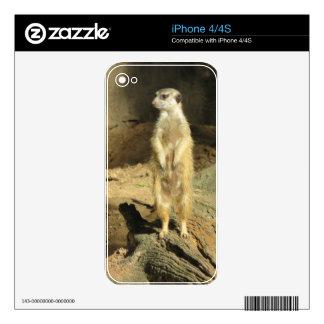 Meerkat curioso skins para iPhone 4