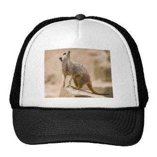 Meerkat Cute Africa Safari Animal Wild Art Mesh Hat