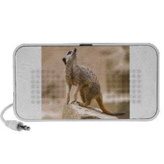 Meerkat Cute Africa Safari Animal Wild Art Travel Speakers