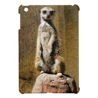 Meerkat derecho curioso - suricatta del Suricata