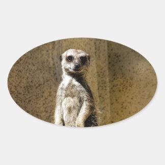 Meerkat derecho curioso - suricatta del Suricata Pegatina Ovalada