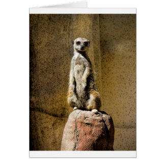 Meerkat derecho curioso - suricatta del Suricata Tarjeta De Felicitación
